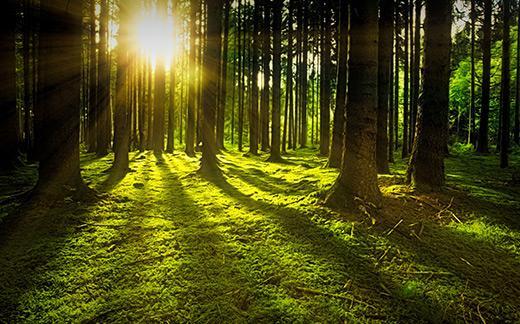 Green Forest Grass