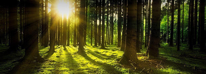 Forest Grass Green