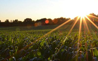 sunrise over crops field