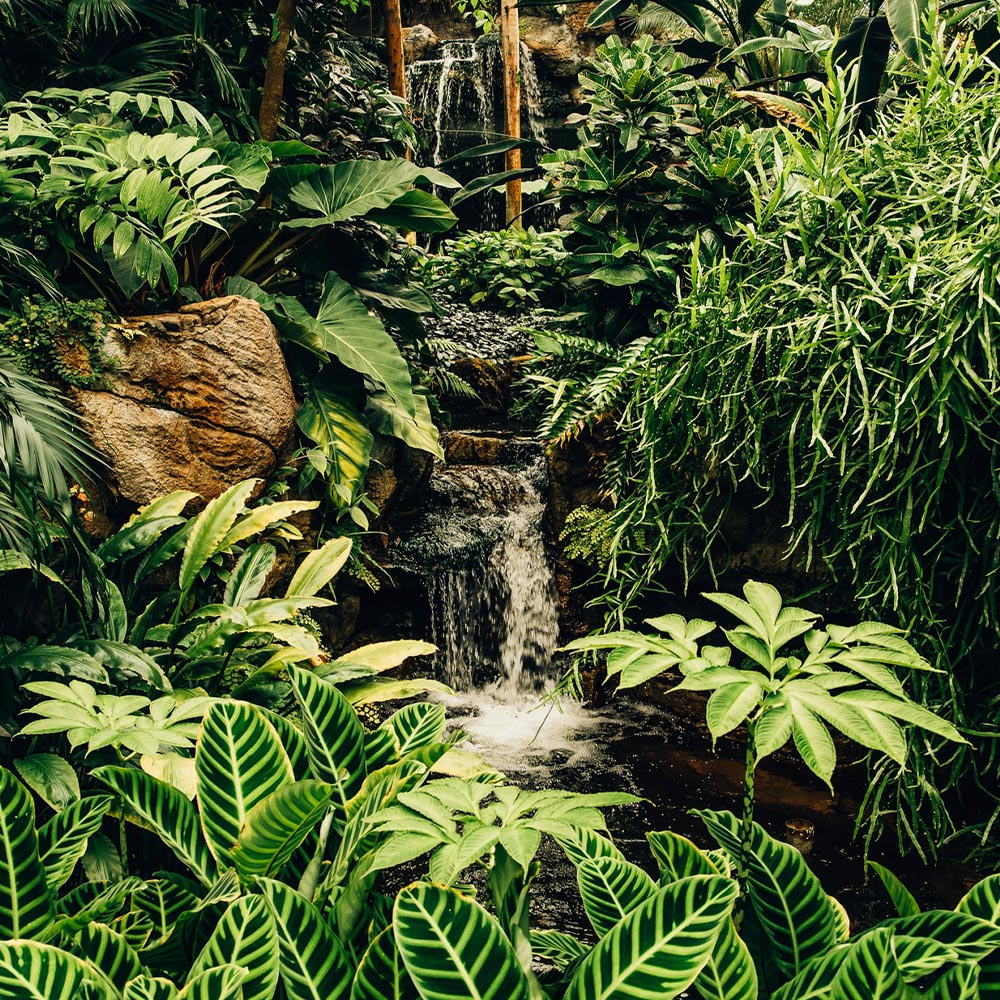 Green Rainforest Jungle Trees