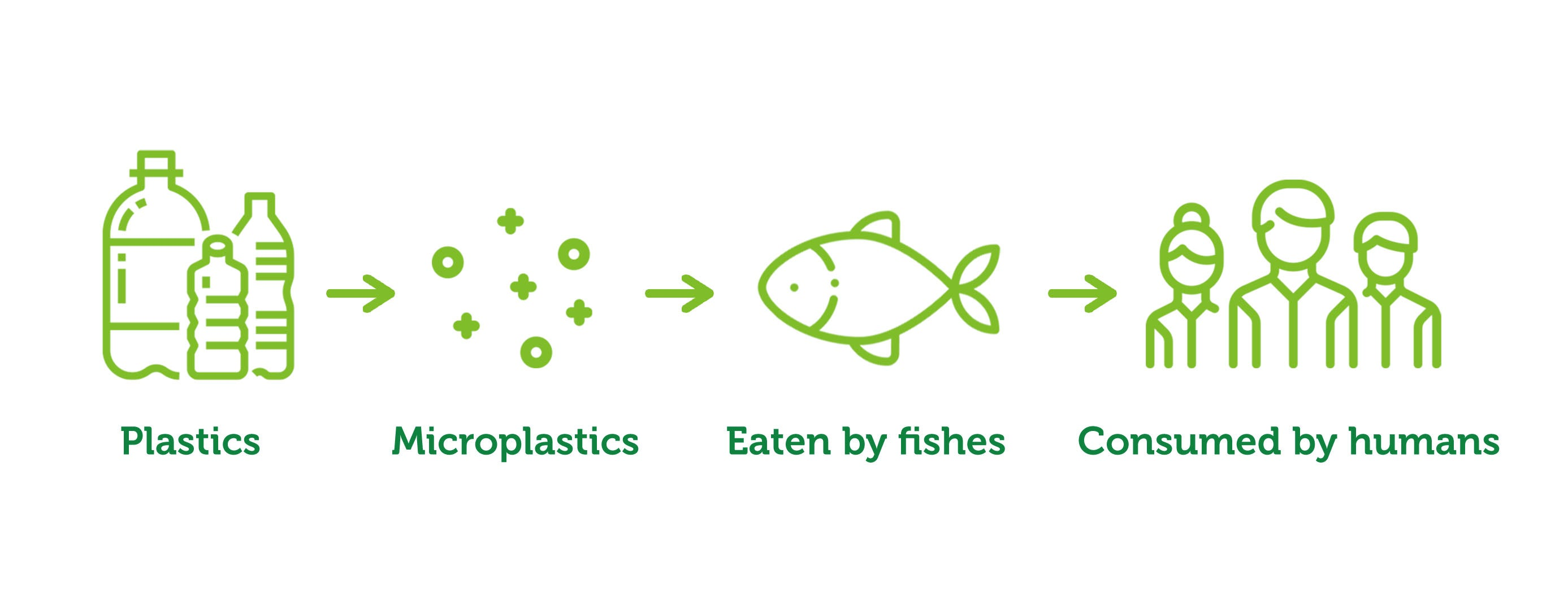 Microplastics contaminating the fish and by humans chain