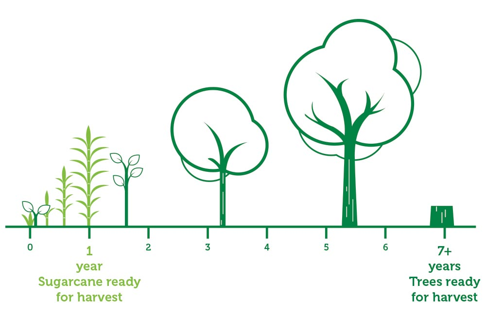 time required to harvest sugarcane pulp