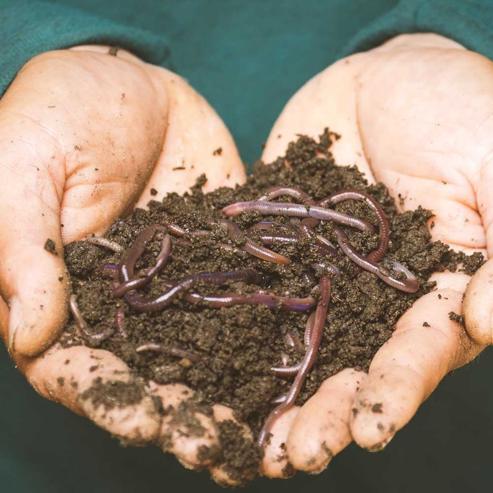 an image of a compost pile in someone's hand