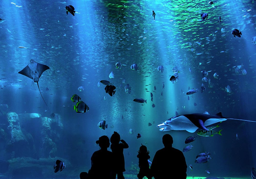 people-at-aquarium_1.jpg